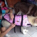 เสื้อชูชีพสุนัข Size XL