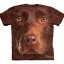 Chocolate Lab Face - Youth thumbnail 1
